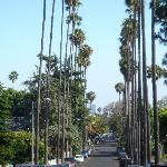 Beautiful street - beautiful palms