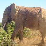 Addo elephant park - Port Elizabeth