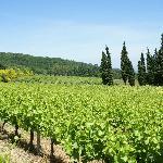 Vallée du Rhône - Gard - Languedoc Roussillon - Sud de France