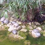 Jardin zoologique de l'hôtel