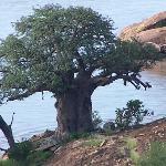 Photo of Leokwe Camp - Mapungubwe National Park