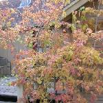 Fall multi colored tree on porch of 1 bedroom cottage