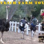 Ostrich Tours & Riding