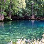 beautiful Manatee Springs