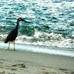 sea bird along the shore....