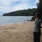 Small beach on edge of rainforest