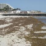 mucillagine sulla spiaggia