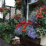 Garden - In Bloom