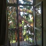 Séquoia juste devant la fenêtre