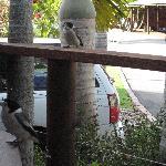 Daily vistors to our Villa verandah