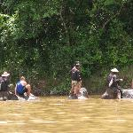 Bathing Elephants in Nam Khan River