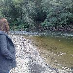 Ringarooma river, just 50 metres away!