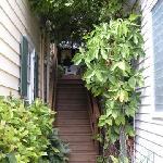 Stairway to Tree Top Suite