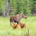 Wildlife in der Umgebung der Lodge