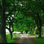 Castle Stuart entry drive