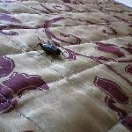 The cricket on the bed