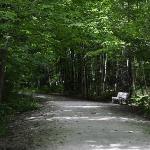 In the Georgian trail