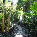 a lovely pathway