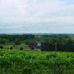 Chateau Chantal Vineyard view