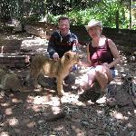 Mit 7 Löwenbabies im Seaview Lion Park