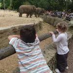 mes enfants au zoo de la palmyre