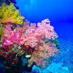 Diving, Belama 033