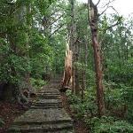 熊野古道の石段