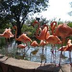 Vallarta Zoo