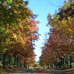 Shute Road & Brookwood Parkway