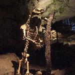 Ein Bären-Skelett