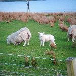 The cuties next door!!