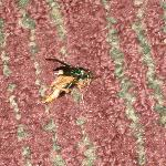 here is the bug after I squashed it...