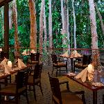 Forest Dining at Kewarra Beach Resort