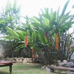 courtyard/garden at Bellas Artes Guest House