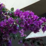 fiori del giadino B&B