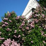 The Lilac Festival in June is Worth Attending