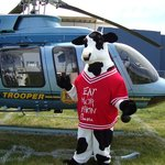 Safety Cow!