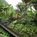 Papillote Tropical Gardens