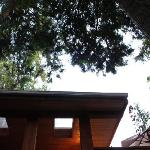 Looking up outside the treehouse cottage