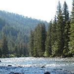 Gallatin River--full of trout