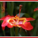 Orquideas Moxviquil OM Foto