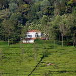 Breath taking setting in the midst of a tea plantation