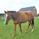 We are part of a working Arable Farm and we also offer Bed and Breakfast for Horses and Riders