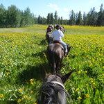 Teton Wagon Train & Horse Adventure Foto