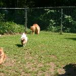 Playtime in the play yard