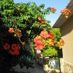 Villas Cavo Marathia Foto