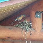 Birds @ cabin