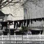 panni stesi degli Amish