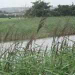 The canal walk to Blennerville, very convenient to Greenview House