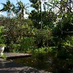 Jardins, poissons